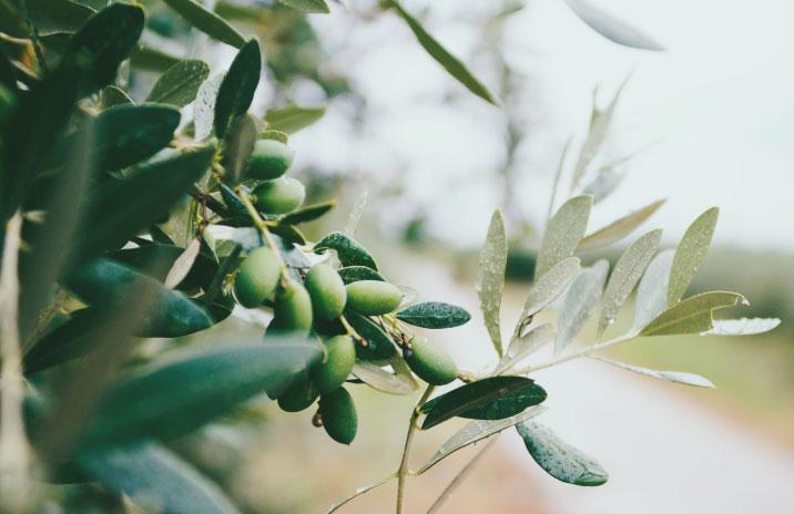 merenda-nell'oliveta-2021