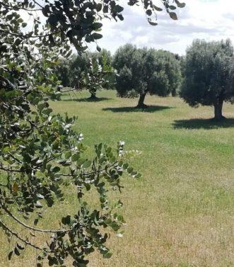 Masseria Lisi selva di Fasano (2)