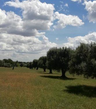 Masseria Lisi selva di Fasano (3)